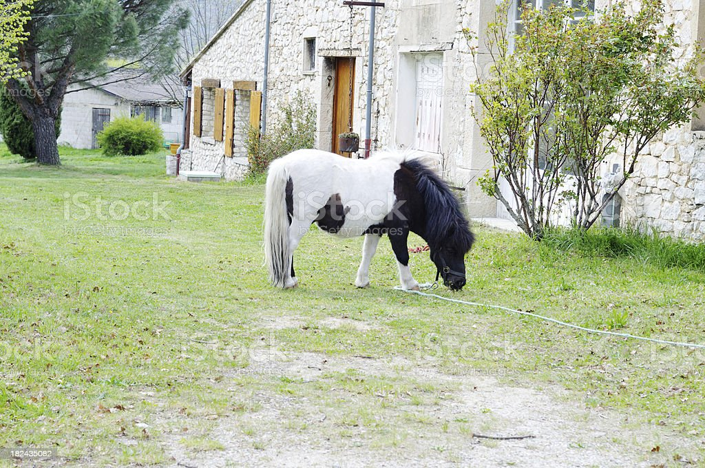 pony in garden, Provence, France stock photo