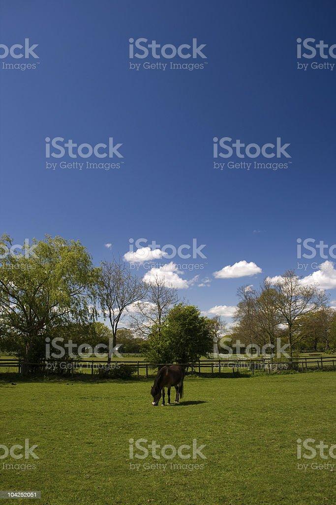 Pony Lizenzfreies stock-foto