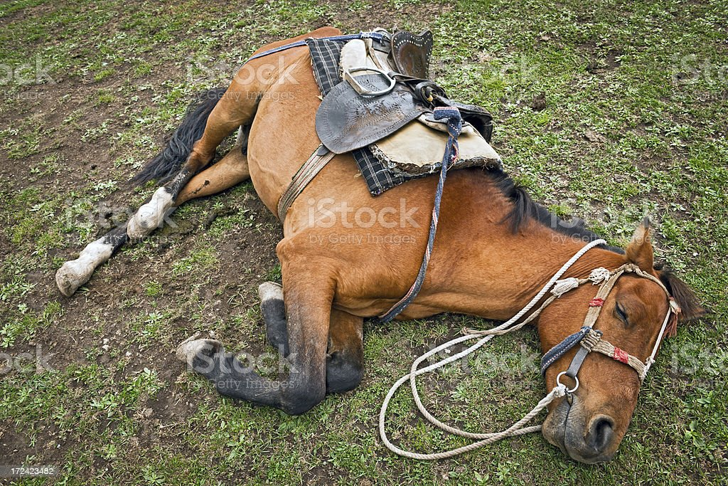 Pony Resting after Work North India royalty-free stock photo