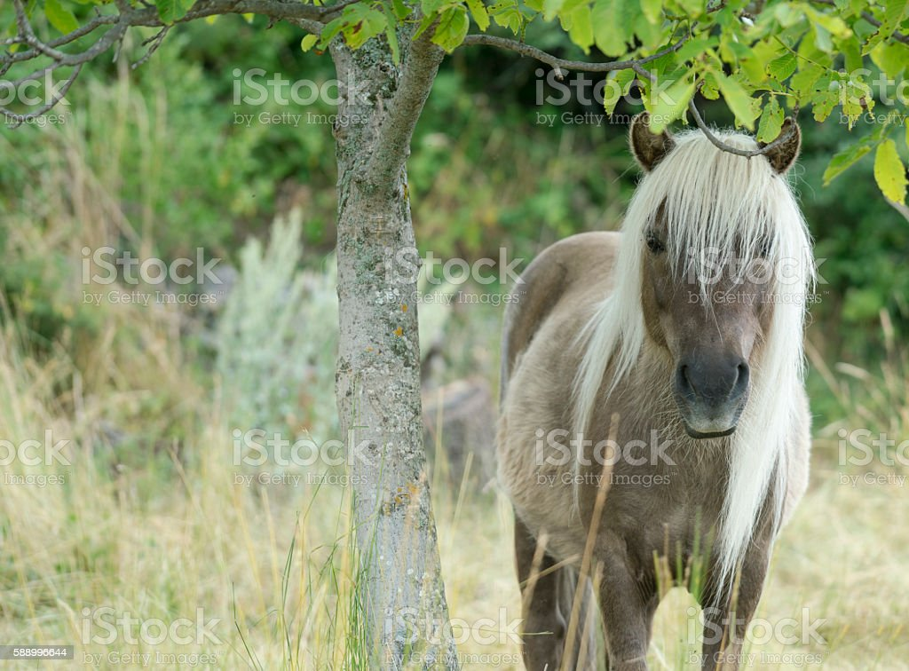 Pony with a long mane, by a tree stock photo