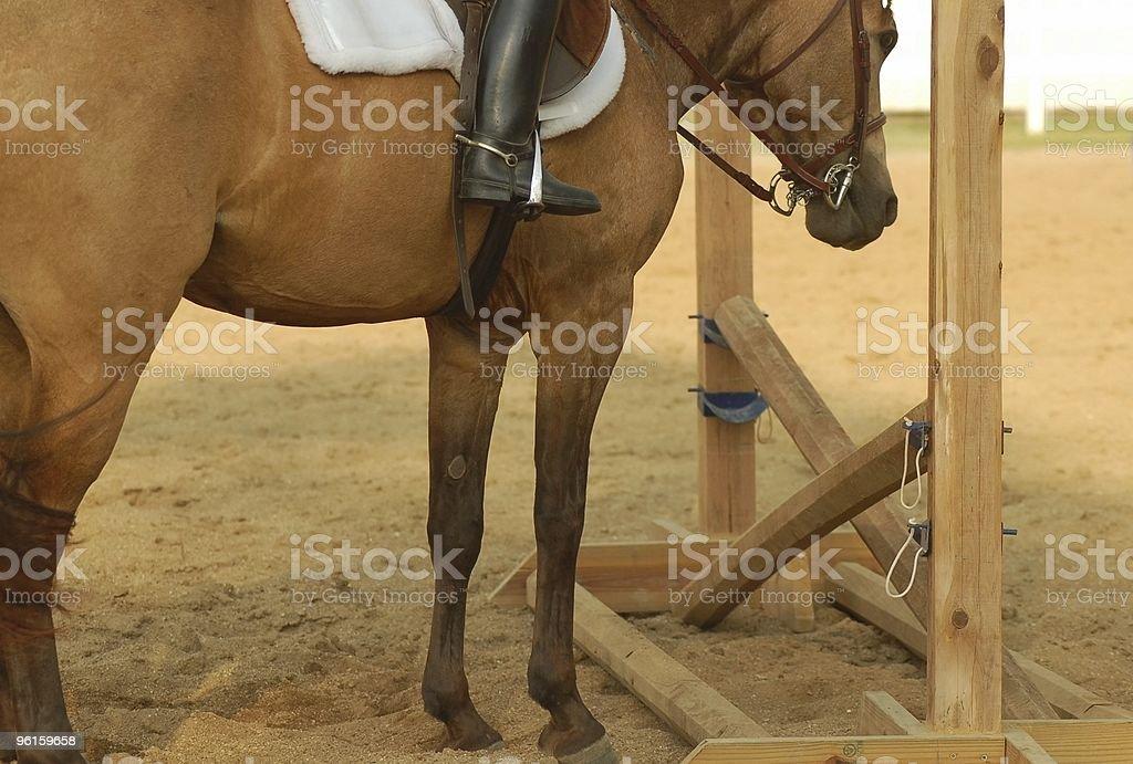 Pony Won't Jump stock photo