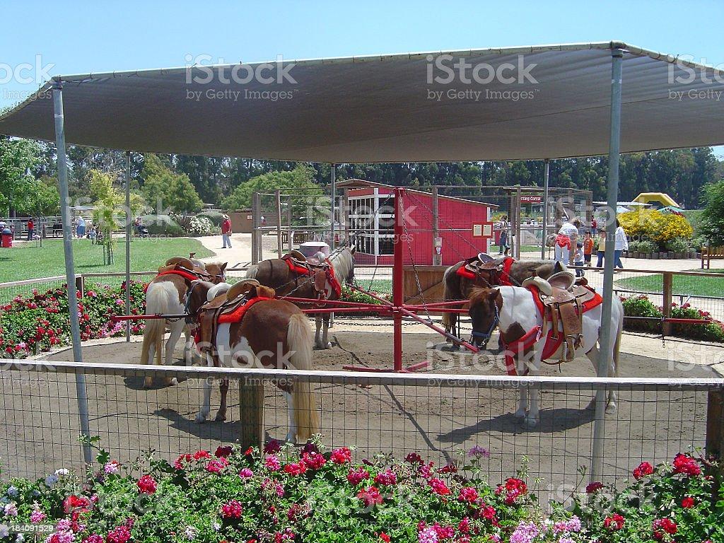 Pony-Go-Round royalty-free stock photo