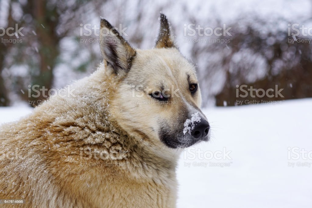 pooch in the winter, the snow sits and grieves, friendship stock photo