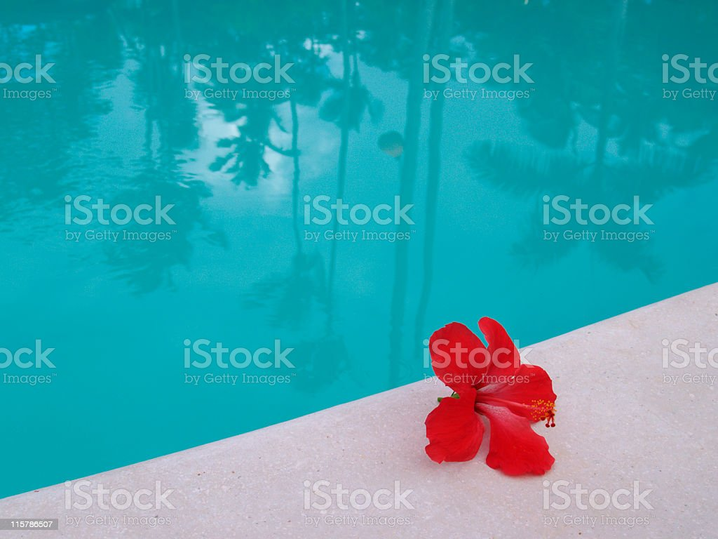pool reflection, hibiscus flower at the edge of swimming pool royalty-free stock photo