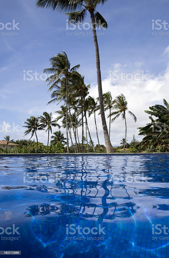 Pool to Palms royalty-free stock photo