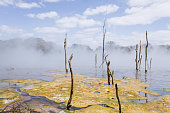 Pools With Thermal Activity in Rotorua, New Zealand