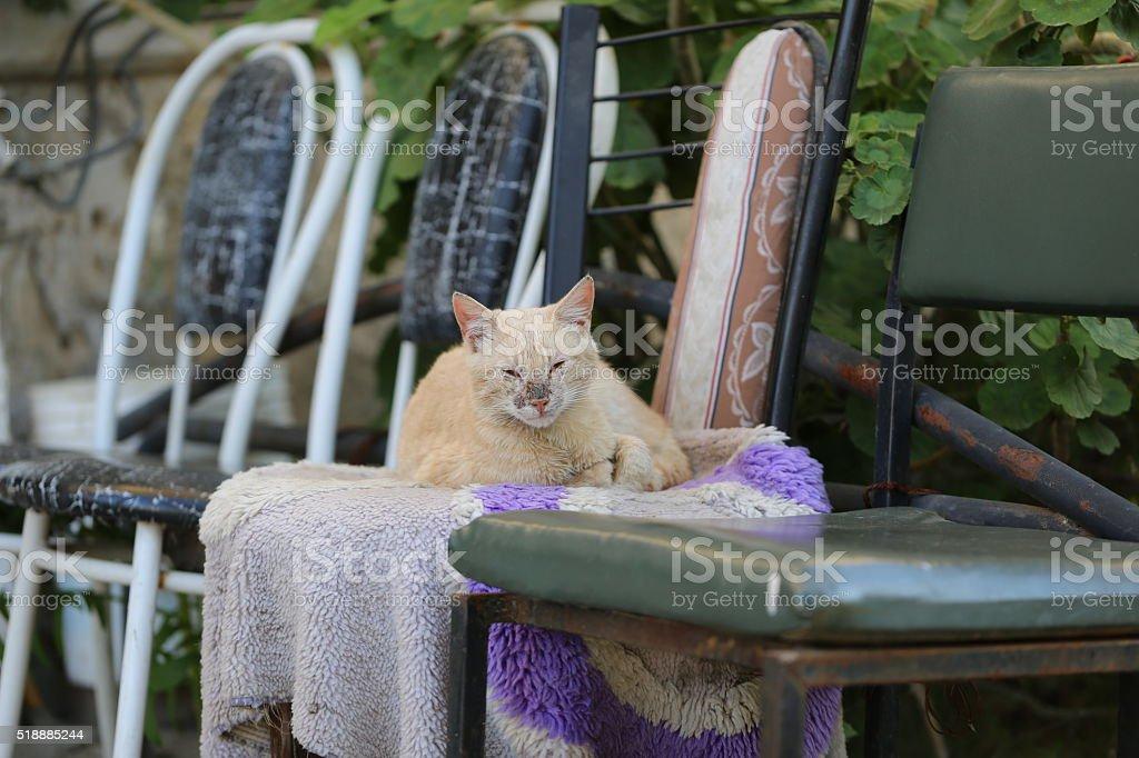 Poor Cat Having Good Time stock photo