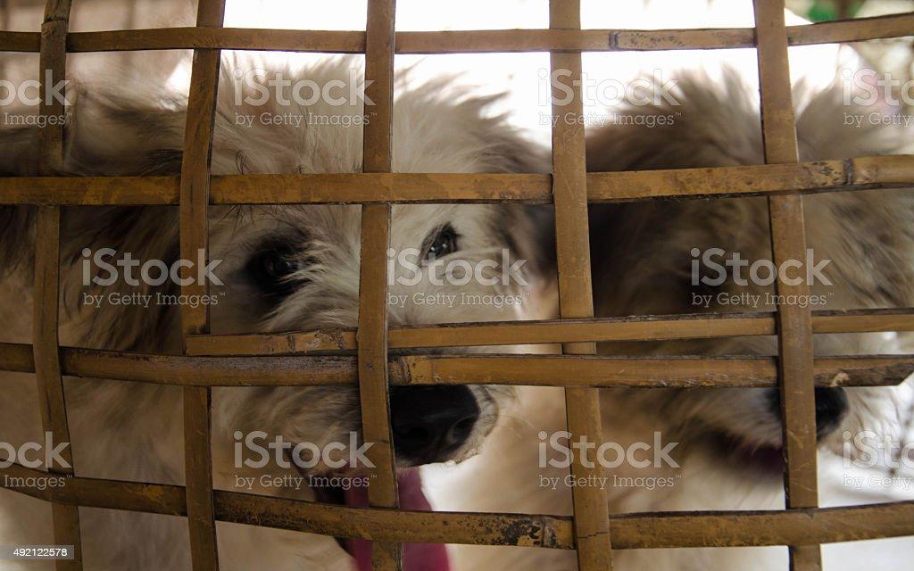 Mala perro cerrada en una jaula. foto de stock libre de derechos