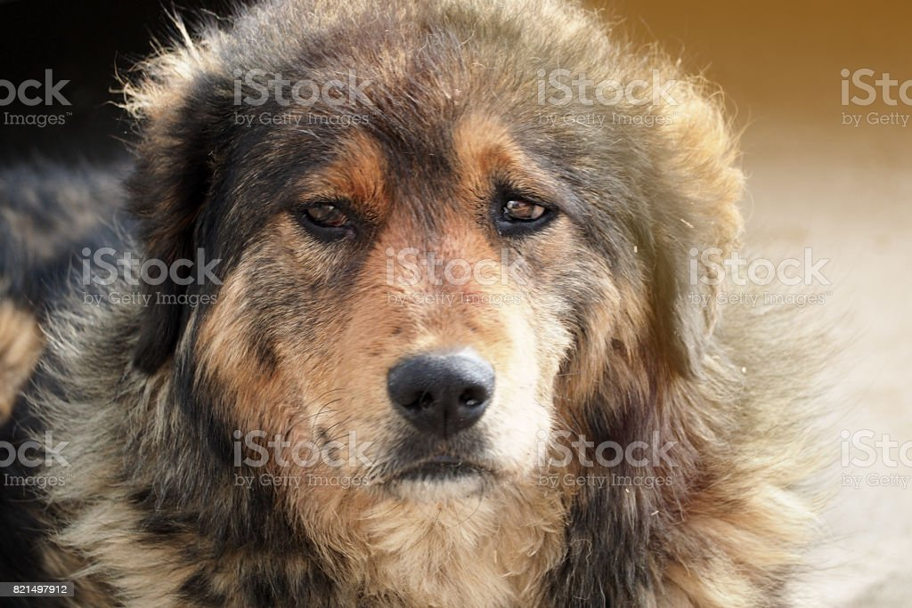 poor dog looking at you stock photo