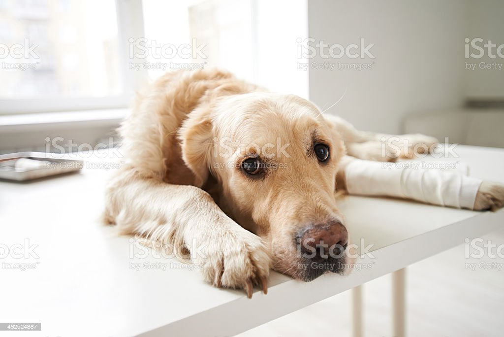 Poor doggie stock photo