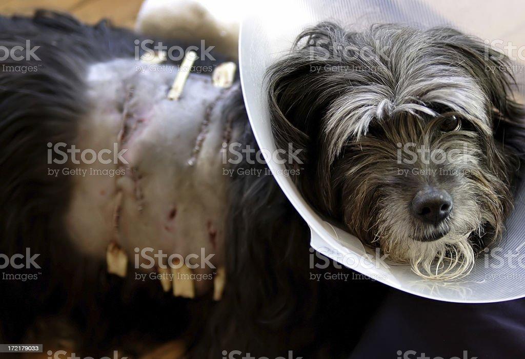 Poor Doggy stock photo