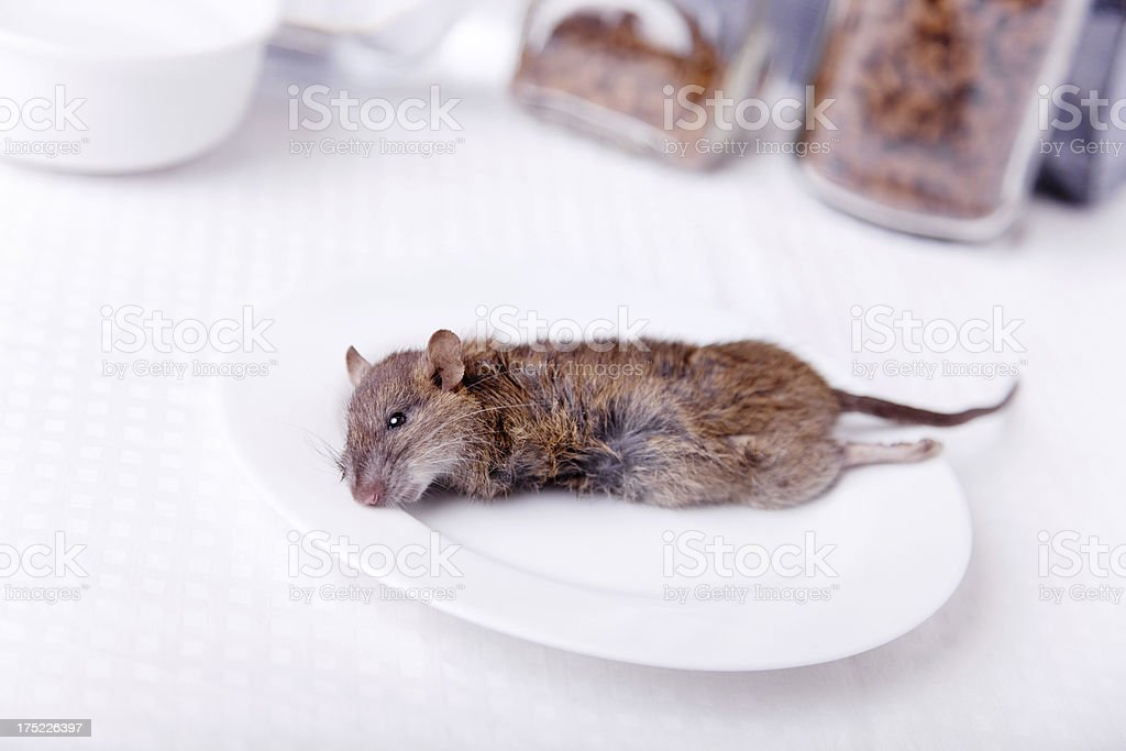 poor mouse stock photo