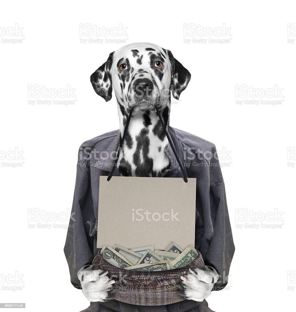 poor unfortunate dog begging stock photo