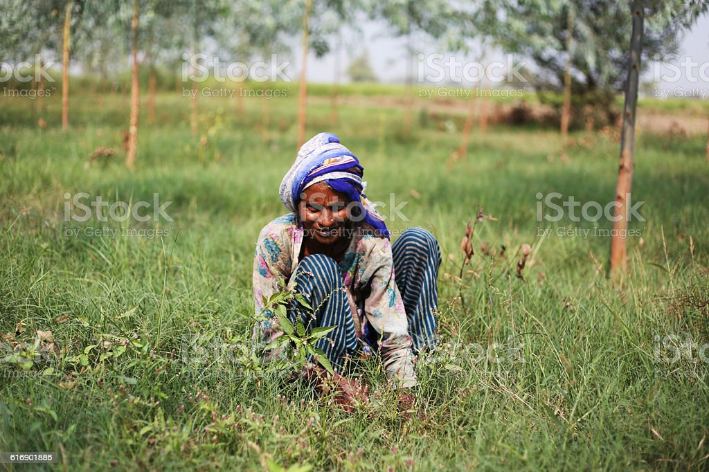 Poor women cutting grass stock photo
