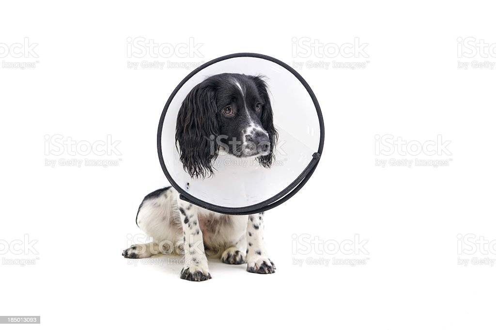 poorly puppy stock photo