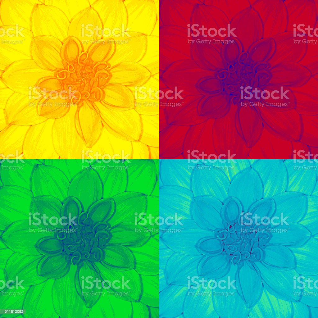 pop dahlia stock photo