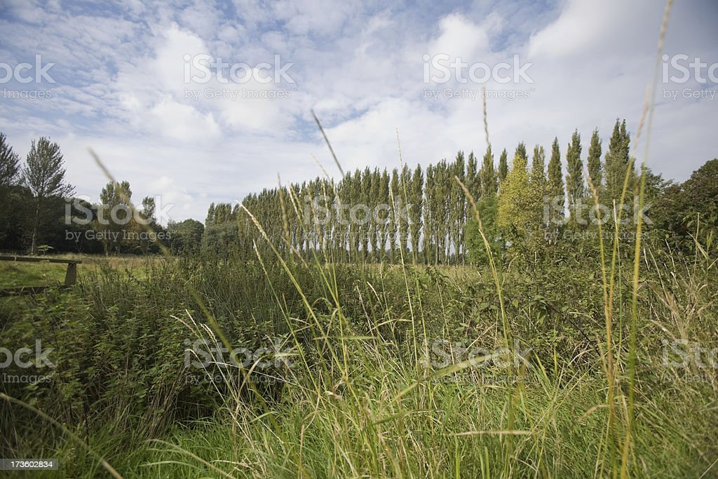 Poplar Grove-Please see thumbnail below for alternative view royalty-free stock photo