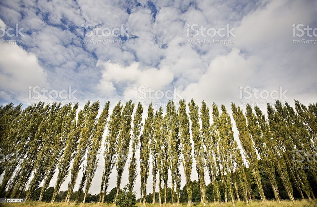 Poplar Grove-Related images below royalty-free stock photo