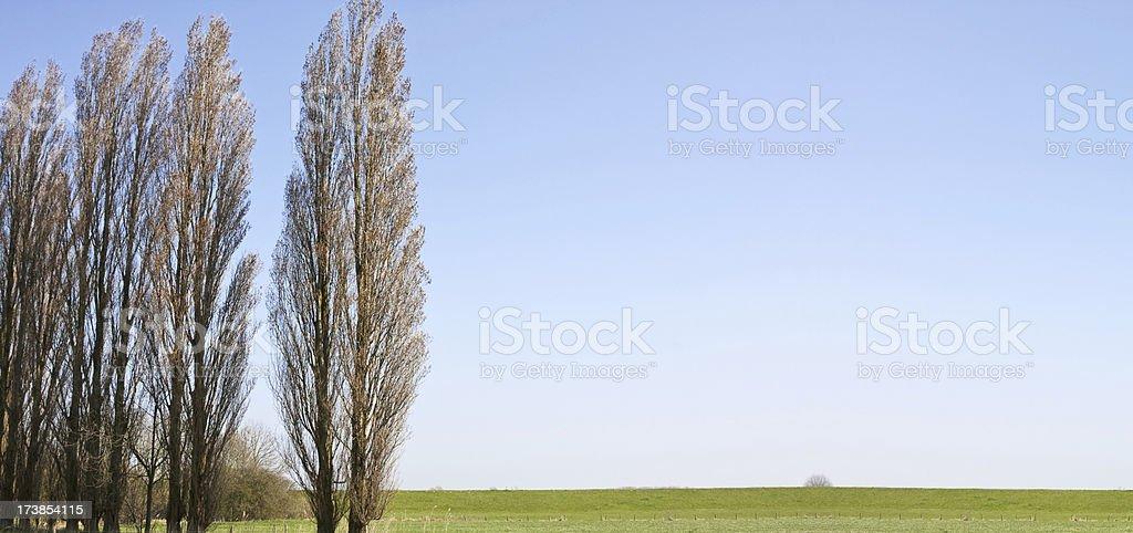 Poplar landscape XL royalty-free stock photo