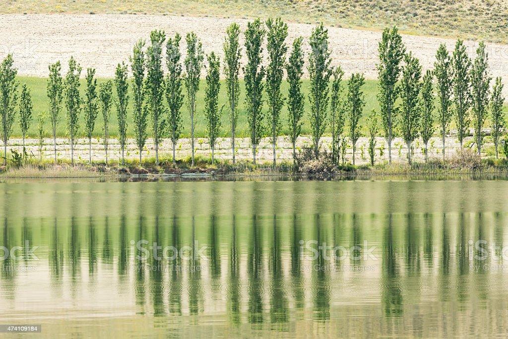 Poplar tree at Sariyar Dam Lake stock photo