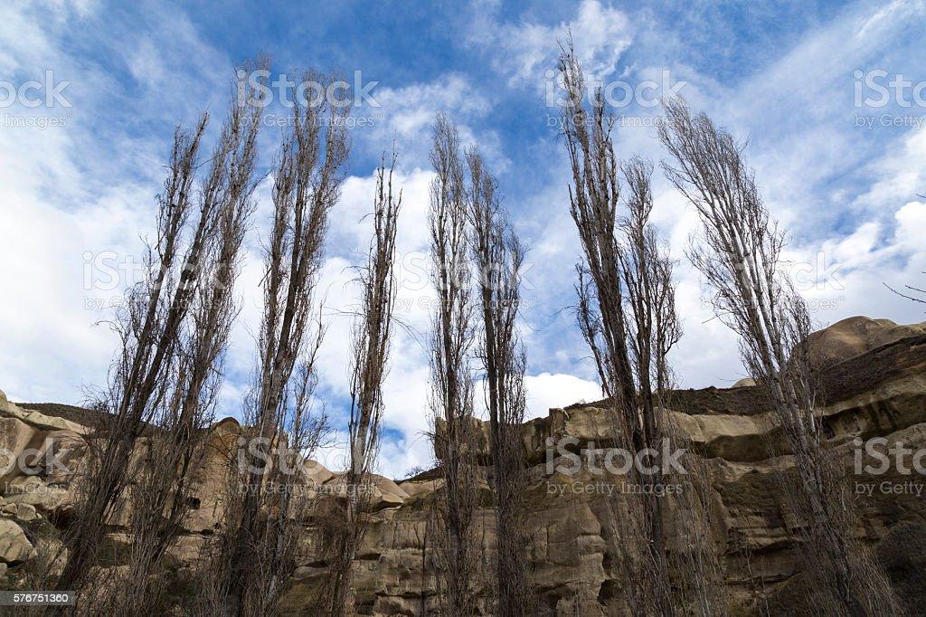 Poplar Trees In Cappadocia stock photo