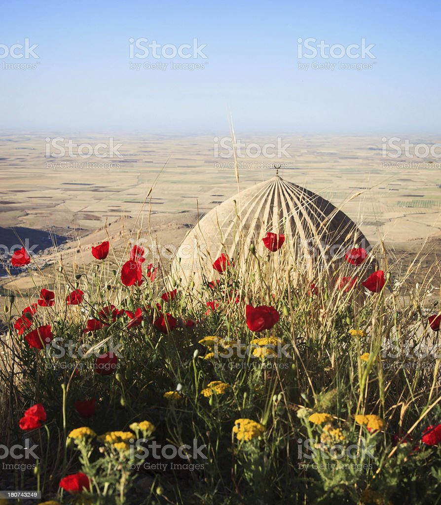 Poppies and Mesopotamia in Mardin royalty-free stock photo