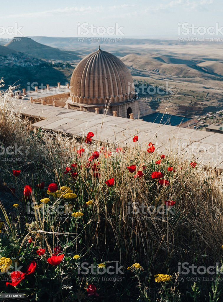 Poppies and Mesopotamia in Mardin stock photo