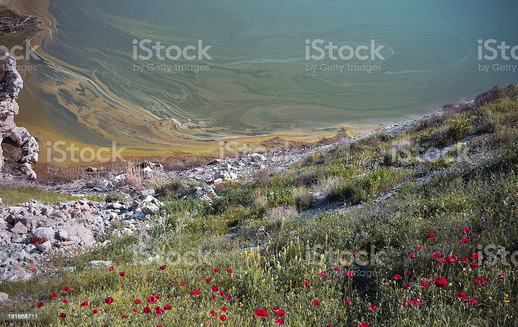 Poppies by a lake royalty-free stock photo