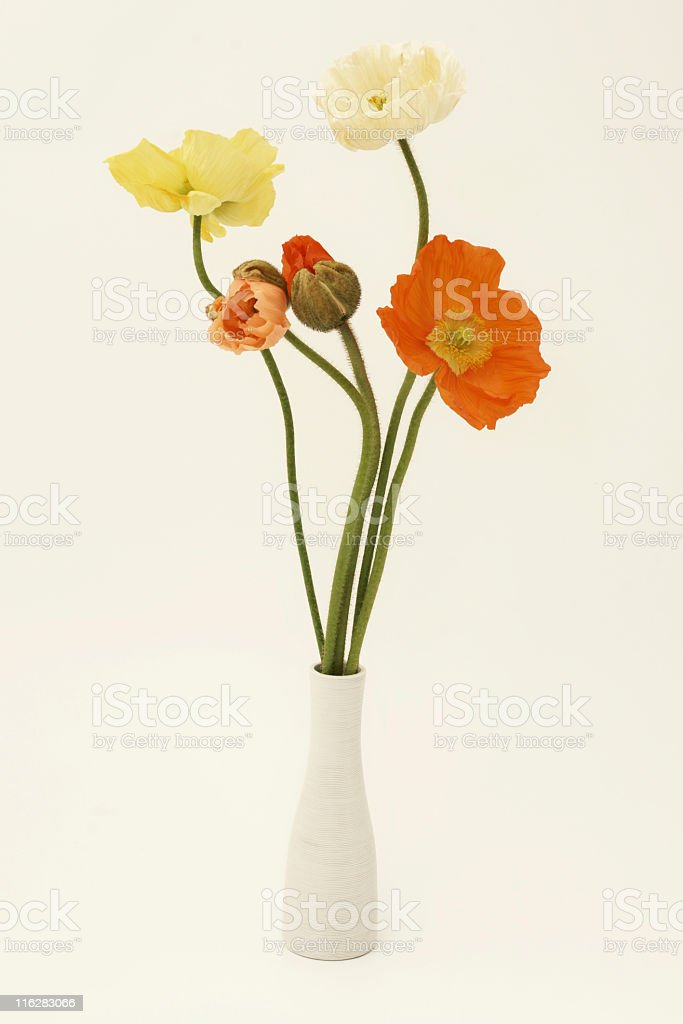 Poppies in a vase royalty-free stock photo