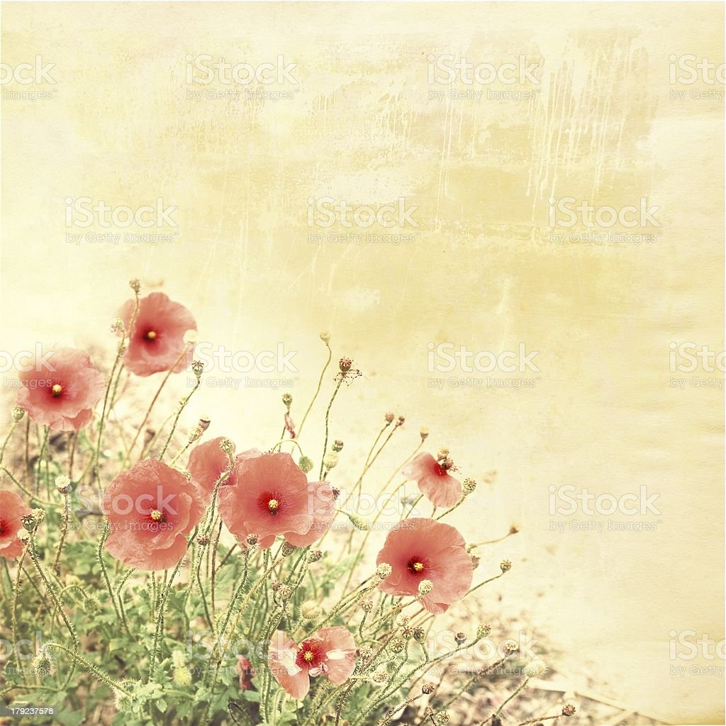 poppies on old paper , vintage background royalty-free stock photo