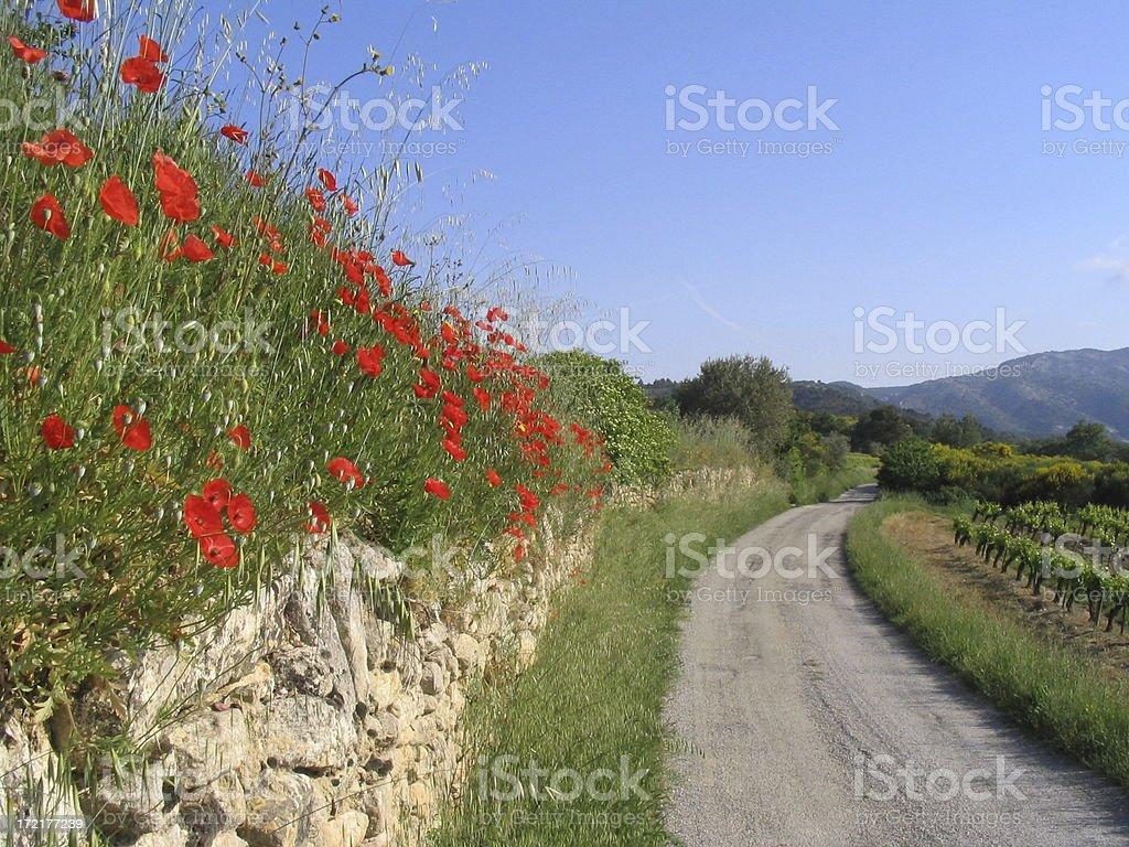poppies on quiet vineyard road stock photo