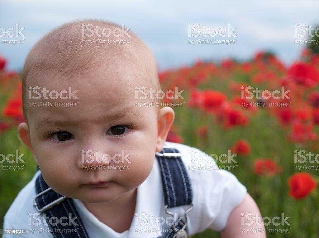 Poppy Baby royalty-free stock photo