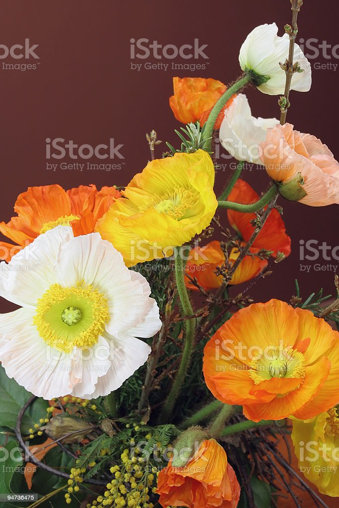 Poppy Bouquet royalty-free stock photo