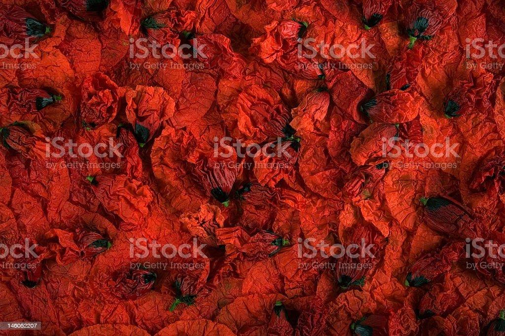 Poppy buds royalty-free stock photo