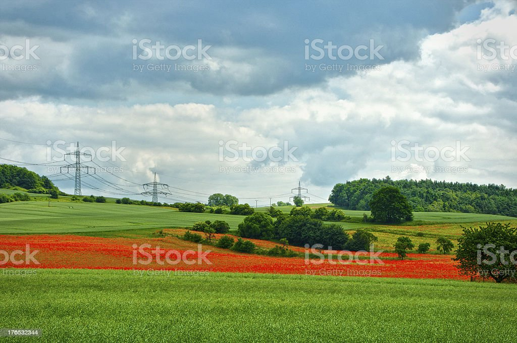 poppy field - agriculture landscape royalty-free stock photo