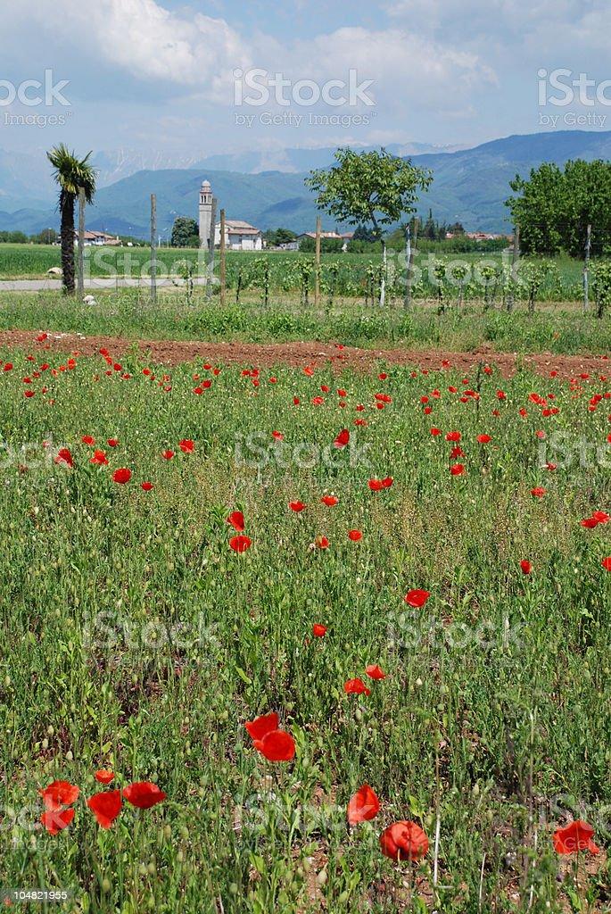 Poppy Field and Church 2 royalty-free stock photo