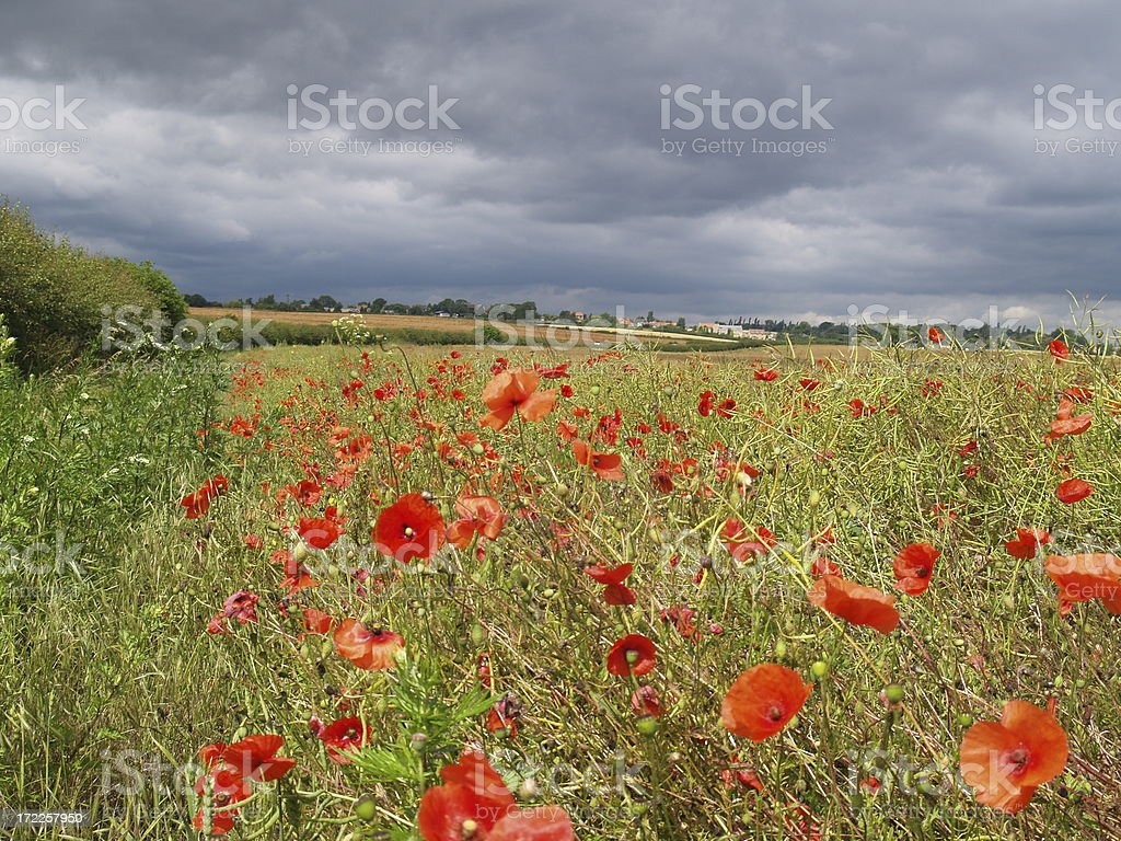 Poppy field and clouds stock photo