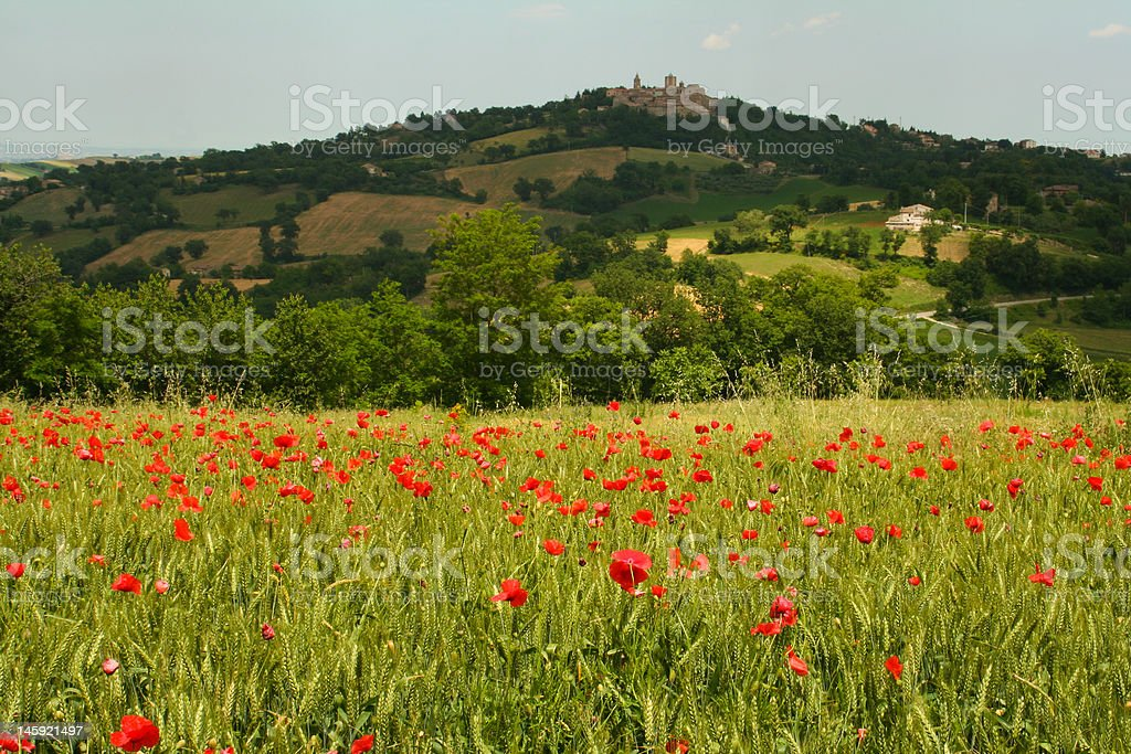 Poppy field and hilltop town royalty-free stock photo