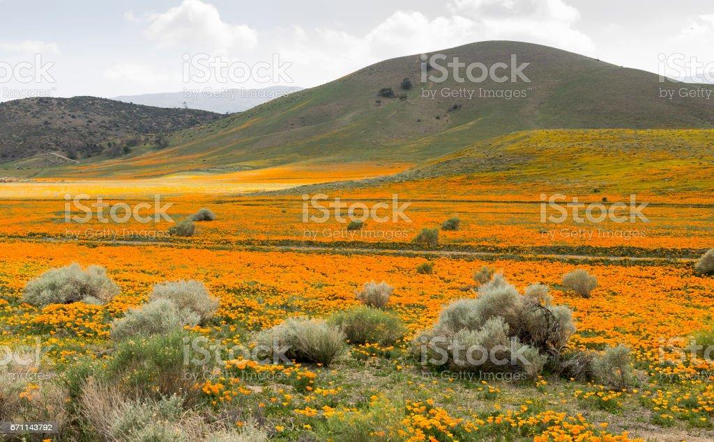 Poppy Field and Mountain stock photo