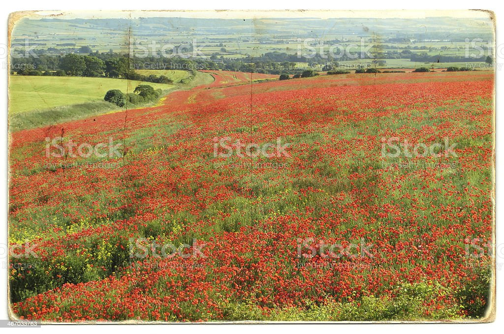 Poppy field with a grunge effect royalty-free stock photo