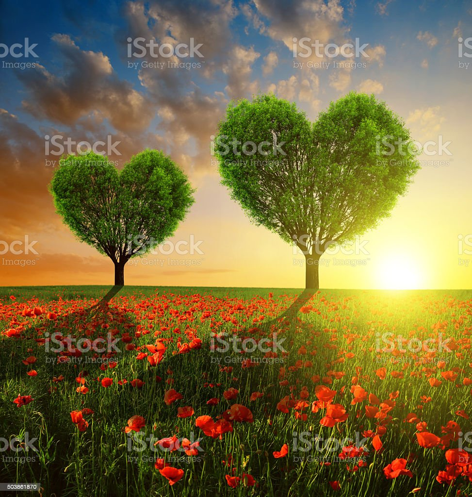Poppy field with trees in the shape of heart stock photo