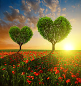 Poppy field with trees in the shape of heart
