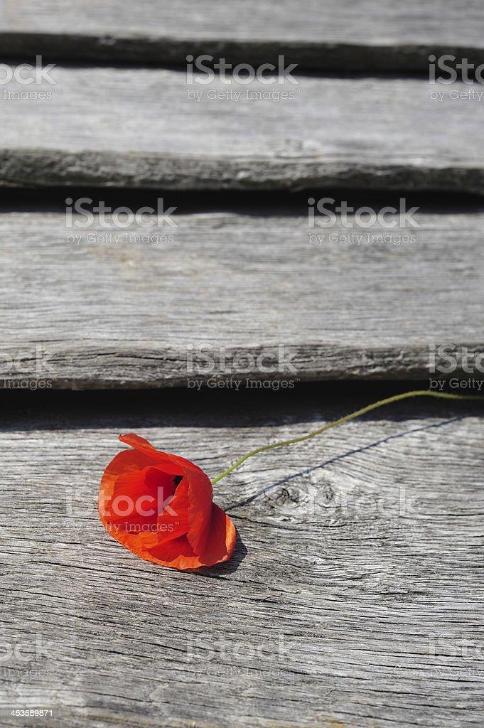 Poppy flower vertical stock photo