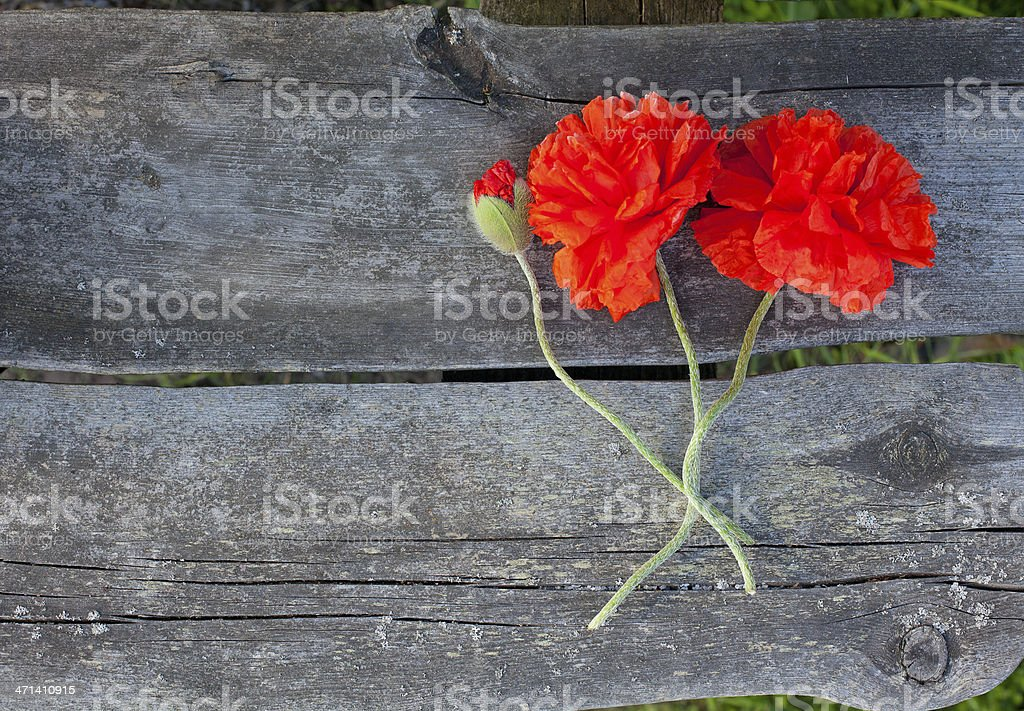 poppy flowers on wooden bench stock photo