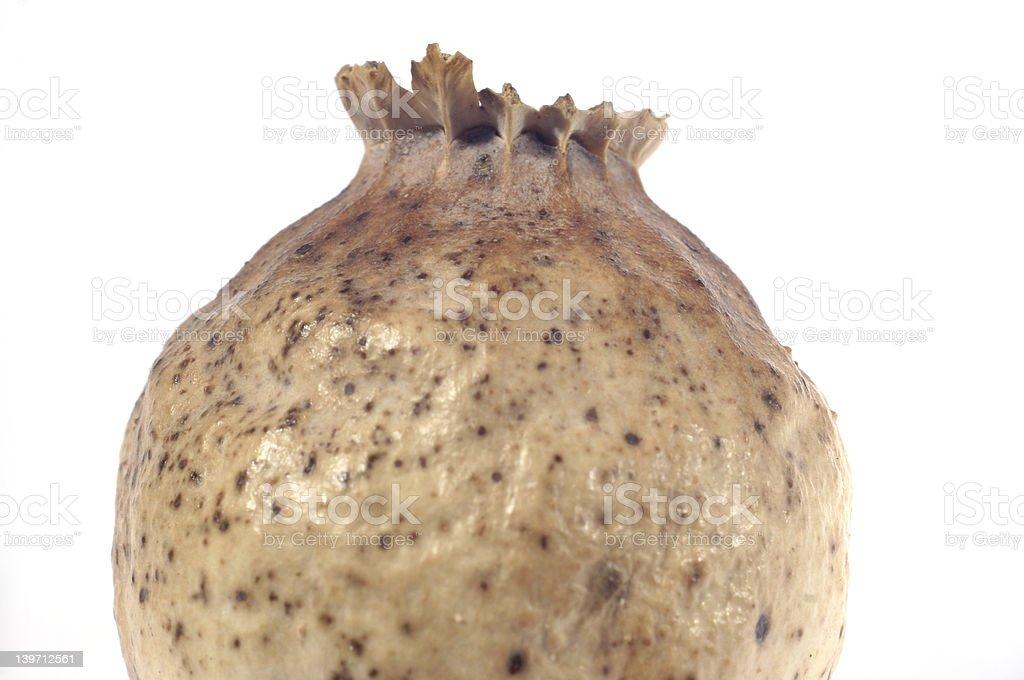 poppy head stock photo