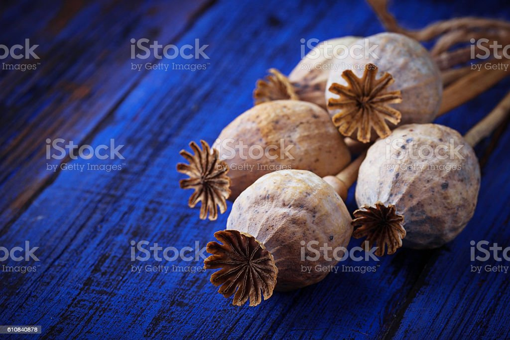 Poppy  heads on wooden background stock photo