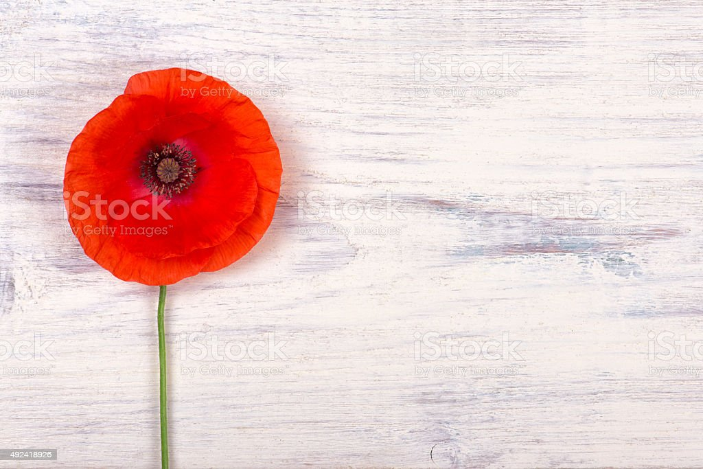 poppy on old white wooden table closeup stock photo