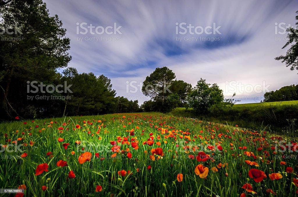 poppy poppies field night clouds nightshot light amapola stock photo