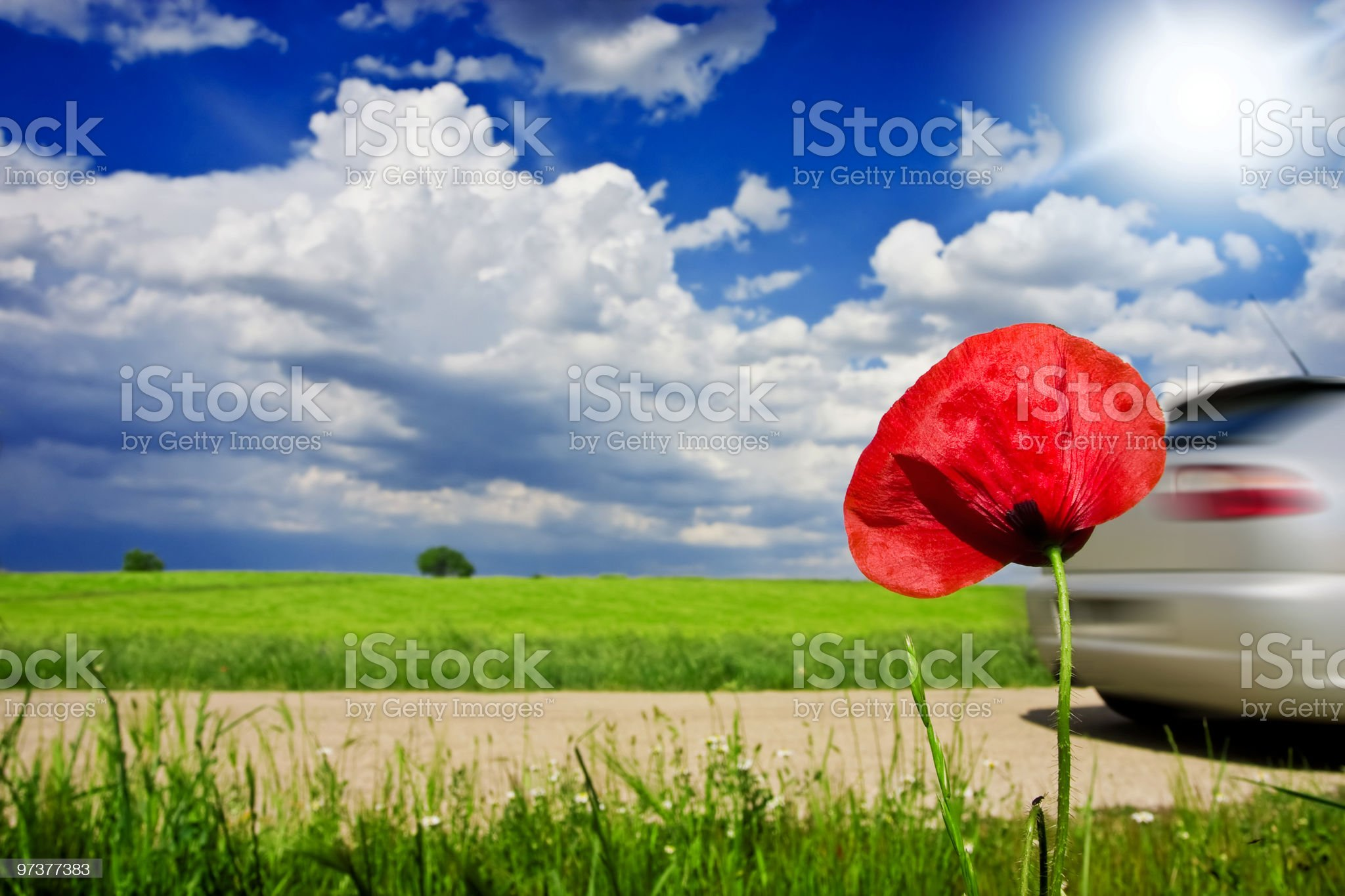 Poppy red flower with fast car passing by on background royalty-free stock photo