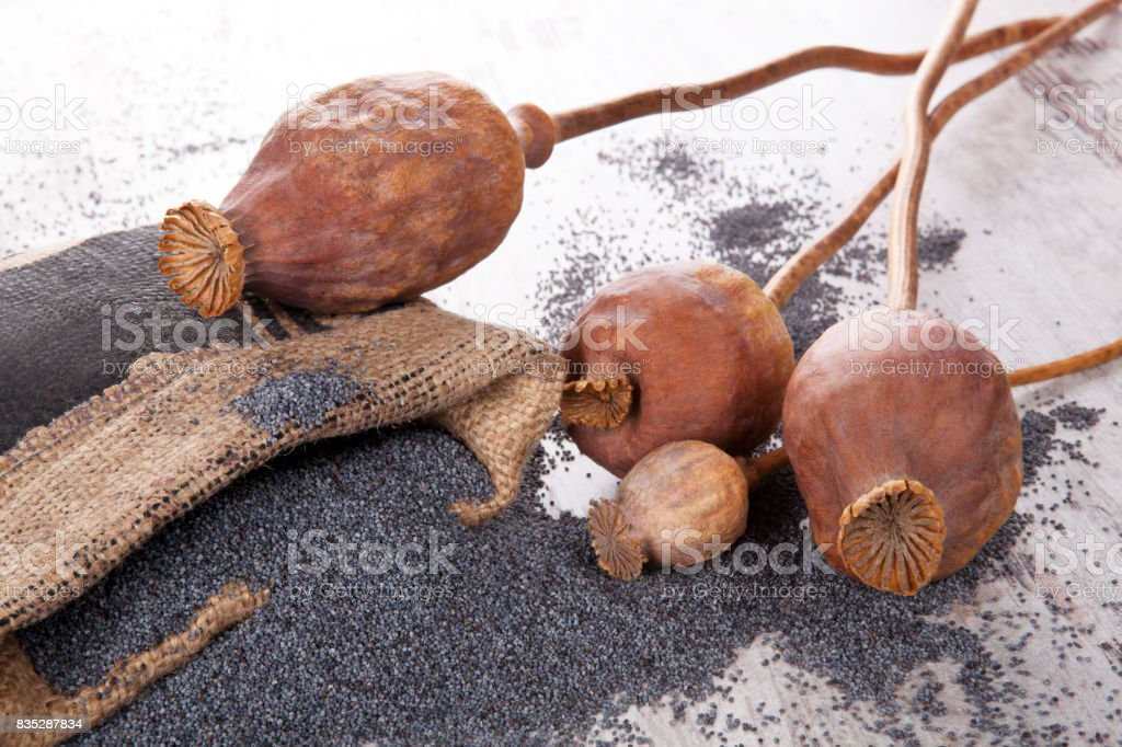 Poppy seeds and heads. stock photo
